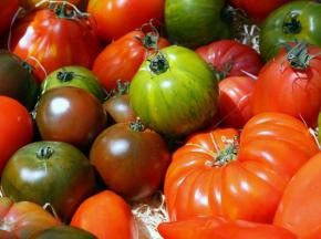 Julien Bouche - Maraîcher Bio - Tomates Anciennes - 800g