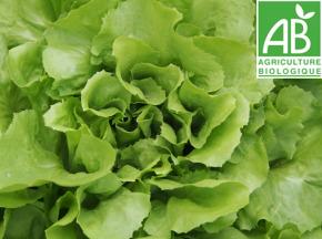 Mon Petit Producteur - Salade Batavia