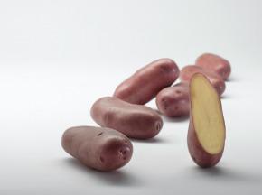 Maison Bayard - Pommes De Terre Chérie