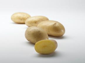 Maison Bayard - Pommes De Terre Gourmandine