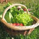 Le Jardin des Gallines - Petit Panier De Légumes Pritanier Bio