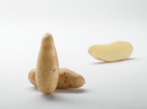 Maison Bayard - Pommes De Terre Ratte Du Santerre - 3kg