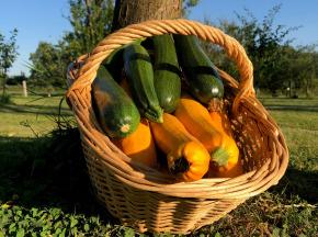Valentin Grain - Fruits et légumes Conversion Bio - Courgettes - 1kg