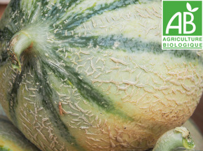 Mon Petit Producteur - Melon Céleste [ Poids Moyen 700g ]