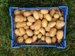 La Ferme Boréale - Pommes De Terre Agata Calibre 35-55 - 10kg