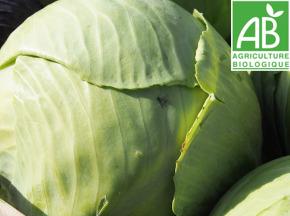 Mon Petit Producteur - Chou Vert Lisse Bio [poids Moyen 900g]