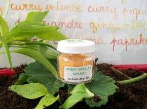 HERBA HUMANA - Piment Antillais Orange Bio Cultivé en France 3 g