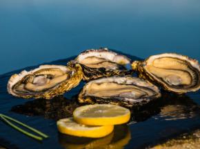 Les huîtres Gaboriau Frères - 96 Huîtres Spéciales N°3