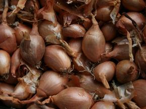 Le Jardin des Gallines - Oignons Jaunes, Filet 3kg