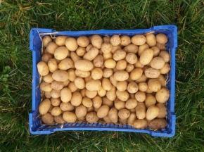 La Ferme Boréale - Pommes De Terre Agata Calibre 28-35 - 10kg