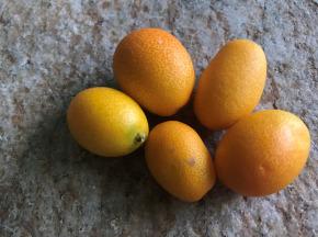 Le Jardin des Antipodes - Kumquat - 500g