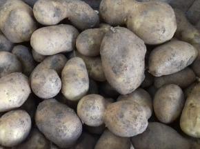 Multiproductions - Cédric Joliveau - Pomme De Terre Agria 500g