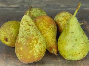 Valentin Grain - Fruits et légumes Conversion Bio - Poire Conférence - 1kg