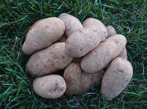 La Ferme Boréale - Pommes De Terre Agata Calibre 55-75 - 10kg
