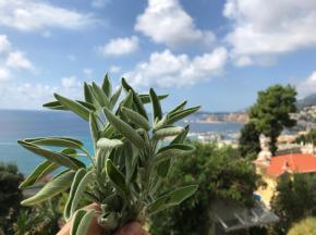Le Jardin des Antipodes - Sauge Fraîche Bio - 1kg