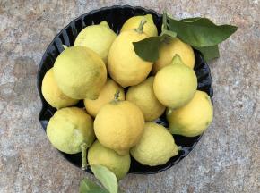 Le Jardin des Antipodes - Citron Femminello Frais Non-traités de Vintimille - 6kg