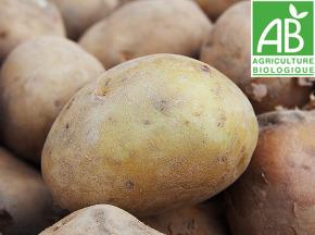 Mon Petit Producteur - Pomme De Terre Allians - Variété À Chair Ferme