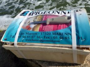 Huîtres Pigeonnier - Huîtres Fines De Claires N°3 - 48 pièces minimum - Couteau à huître offert