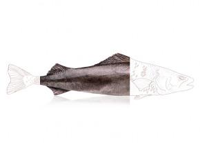 """Qwehli - Filet De Morue Charbonnière """"black Cod"""" Msc - 0,8 À 1,2 Kg"""