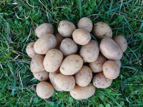La Ferme Boréale - Pommes De Terre Agata Calibre Grenaille - 10kg