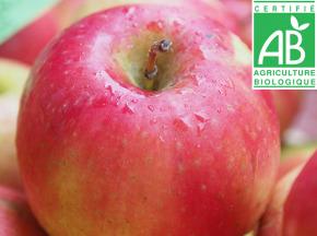 Mon Petit Producteur - Pomme Idared Bio - 1kg
