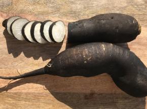 La Ferme du Polder Saint-Michel - Radis Noir Bio Croquant Et Poivré