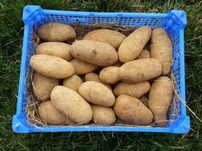 La Ferme Boréale - Pomme De Terre Spunta Calibre 55-75 - 10kg