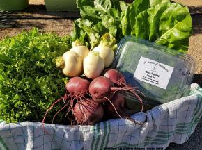 Les Jardins de Champlecy - Panier De Légumes De Saison