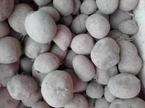 Le Jardin des Gallines - Pomme De Terre Melody, 5 Kg