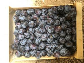 Valentin Grain - Fruits et légumes Conversion Bio - Prune Quetsche Bio 500g