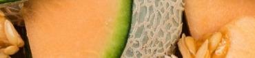 Nos melons