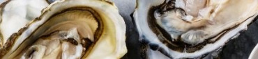 Huîtres en direct des ostréiculteurs français