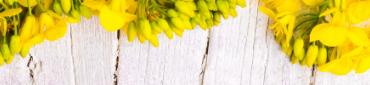 Huile de colza en direct des meilleurs producteurs français
