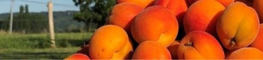 Meilleures ventes de fruits et légumes