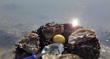 Les Huîtres Chaumard - 12 Très Grosses Huitres (hors Calibre +de 200grammes)