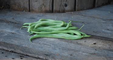 La Boite à Herbes - Haricots Vert - 100g