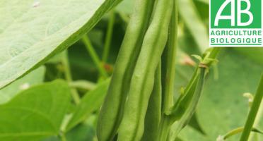 Mon Petit Producteur - Haricot Vert Bio [vendu Par 500g]