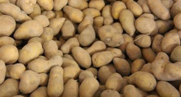 La Ferme du Logis - Pommes de terre Pompadour - 1 Kg