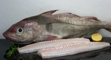 Pêcheries Les Brisants - Ulysse Marée - Dos D'eglefin - Pelé - 400g