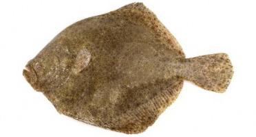 Ma-  poissonnière - Turbot Vidé - Pièce De 1,5 Kg