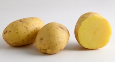 Maison Bayard - Pommes De Terre Excellency - 5kg