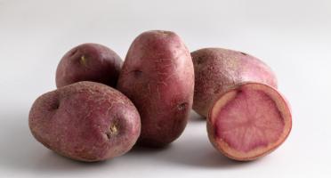 Maison Bayard - Pommes De Terre Mulberry Beauty - 3kg