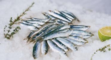 Côté Fish - Mon poisson direct pêcheurs - Anchois 1000g