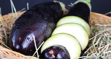 Le Châtaignier - Aubergine 1kg