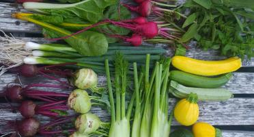 Microferme des Anges - Panier De Légumes Gastronomiques - 2kg