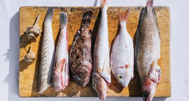 Côté Fish - Mon poisson direct pêcheurs - Poisson Bouillabaisse