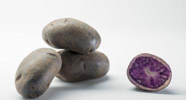 Maison Bayard - Pommes De Terre Blue Star - 5kg