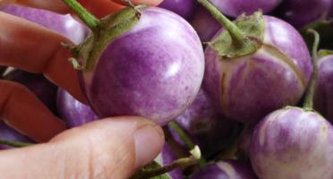 Maison du Pruneau - Aubergine Thaï Lavender ( mini aubergines ) lot de 6