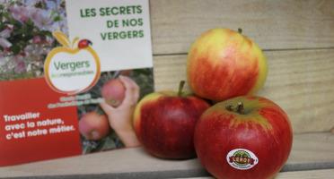 Le Châtaignier - Pommes Elstar - 1kg