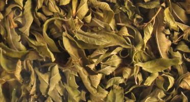 Les Jardins du Mas de Greil - Verveine Citronnelle, Feuilles Séchées